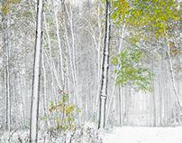 Ensilumi I / First snow I