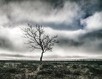 Koivut | Birches