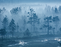 Usva | Foggy forest