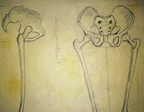 Pelvis/Femur Study