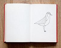 Simple Coastal Birds