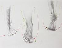 Foot study