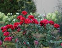 Edible, Front Yard Rose Garden