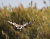 BIRDS OF MANGALAJODI