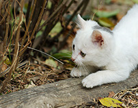 A day with my countryside kittens