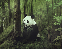 Pandas (Fotomanipulacion Realista)