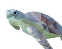 Geographic Turtle - Photoshop