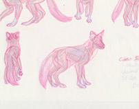 Dhole Dog Anatomy