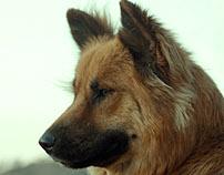 GRIZZLY pet portrait