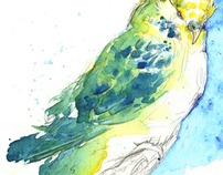 Budgies Series