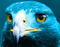 NEWEB Eagle