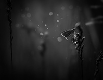 Inspired By Nature.  BlacknWhite Nature Photography