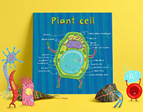 Biology for kids