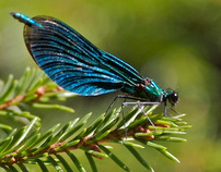 Swedish Wildlife