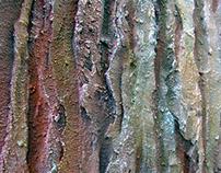 Texture Study: WOOD