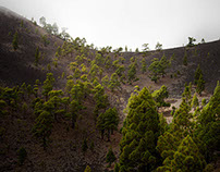 La Palma : A Black and Green Landscape