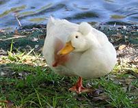 Birds of Spanish Springs (The Villages, FL) 2014