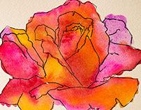 Rose Hue