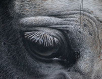 Horse III - Pastel Pencils Drawing