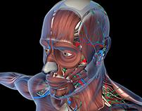 Medical Illustration in 3D.