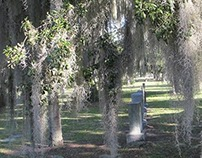 Our Morning Walk (Royal Palm Cemetery)