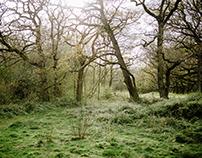 Abbotstone Woods | 2017