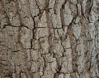 Trees and Bark