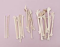 Bird Bones