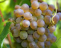 Terras de Vinho