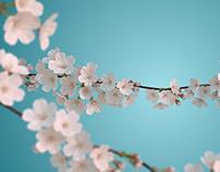 Byblos Bank: Spring