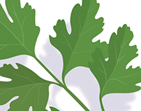 Plant Leaves (Vector Art)