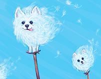 Pomeranian Dandelions