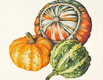 Gourds and Squashes