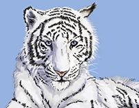 Illustration photo-réaliste Tigre Blanc.