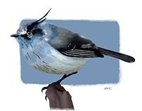 Aves del Parque Nacional La Campana