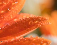 Photography   Orange Pearls