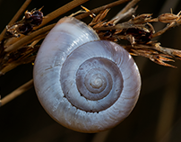 A pinkish snail...