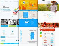Web Design : D