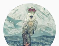 OWL KING!