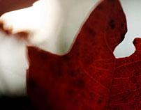 leaves #4