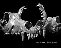 Bodegones de  huesos