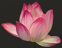 207 Lotus Flower