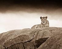 Kusini: Serengeti in sepia