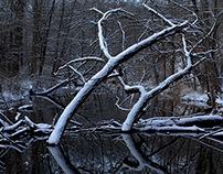 A Winter's Glimpse
