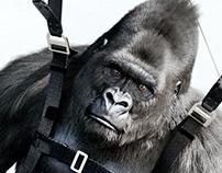 Olmetec Gorillas