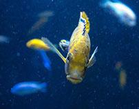 Photography: Fish