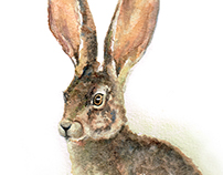 Autumn Hare