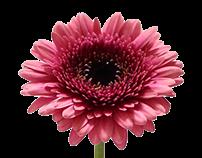無 - flower base