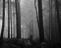 England :: Aspley Wood II
