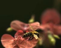 Emiliana Organic Vineyards. Let Nature Get Back to Work